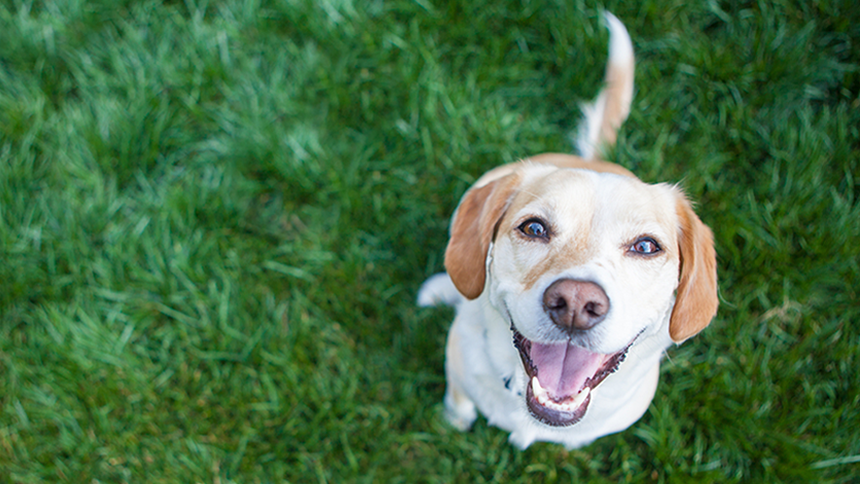 Pet Insurance - 10% off  + get a free quote in minutes