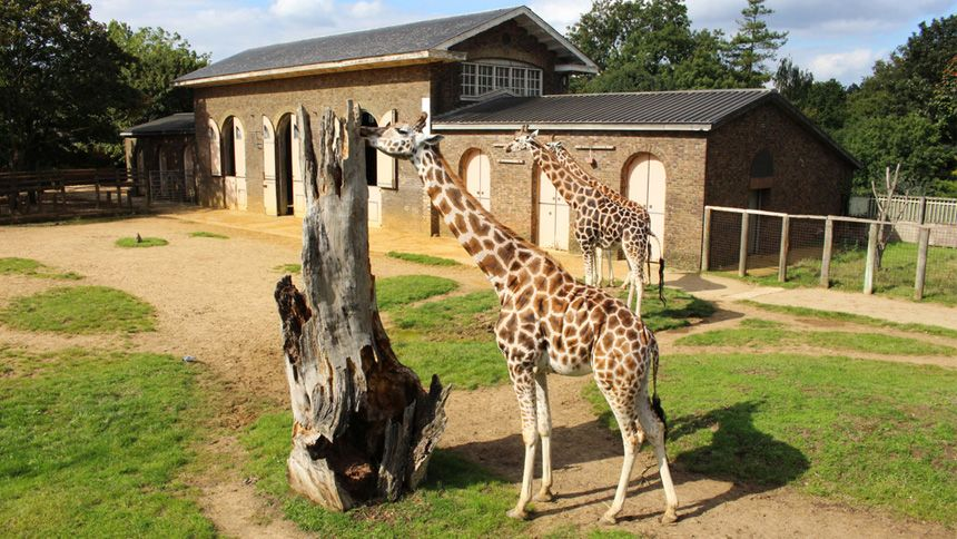 Zoos & Wildlife Parks UK with Hotel. 10% Carers discount