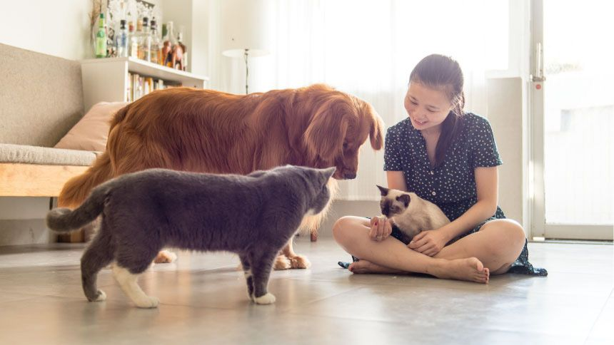 Jollyes - The Pet People - 10% Carers discount on Pet Food & Accessories